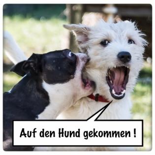 AdHg 155 - Sensible Hunde