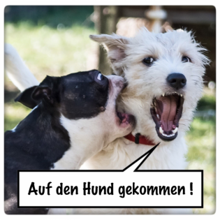 AdHg 156 - Sensible Hunde Teil 2