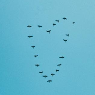 Philipps Playlist PODCAST Folge 15 - Vögel beobachten