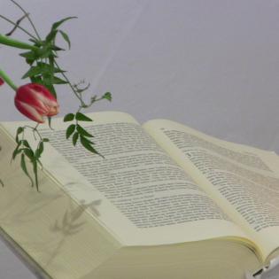 Geistliche Nahrung auf dem Prüfstand (1. Joh 4, 1-6)