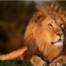 OHN Podcast #13/21 - Perspektivenwechsel: Ankerkraut als erste Gast-Löwen bei DHDL