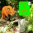 Fuchs & Hase 3: Wir haben Besuch!