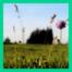 Lachlabor: Kann ein Grashalm höher wachsen als ein Baum?