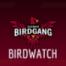 International Birdwatch Episode 13 | Interview Blake Murphy