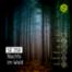 SE 258: Nachts im Wald