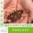Kindernachrichten | Metamorphose: Die Verwandlung von der Raupe zum Schmetterling