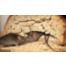 Myšce co se piś/ Das Mäuschen hat Durst
