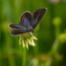 064 - Der erste Schmetterling
