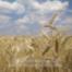 GAG315: Der Mehlkrieg von 1775