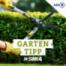 SWR4 Gartentipp - Kissenastern