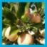 Unterwegs ... bei der Apfel-Ernte