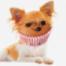 Chihuahua oder Muffin? Wie die EU künstliche Intelligenz regulieren will