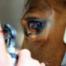 Pferdewoche Tag 2 - Tierarzt