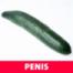 Penis – PENIS ... hihihi