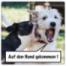 AdHg 159 - Ein Kessel Buntes