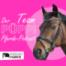 Pferde als Beruf, oder Berufung?!