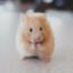 #023 Schweinehund