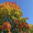 Thomas Huber: Blätter im Herbst